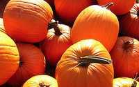 pumpkins under CC2 by RichardBowen