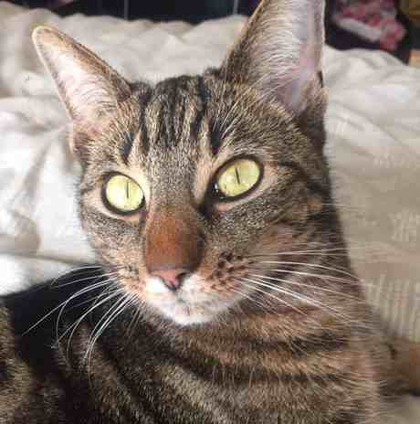 wesley cat