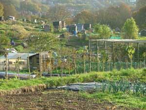 wittshillallotments
