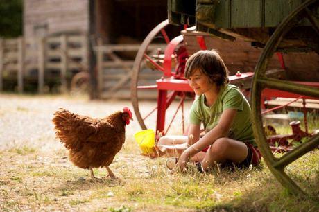 manor farm meet the animals