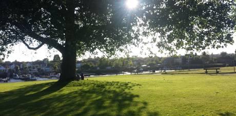 riverside park sun tree