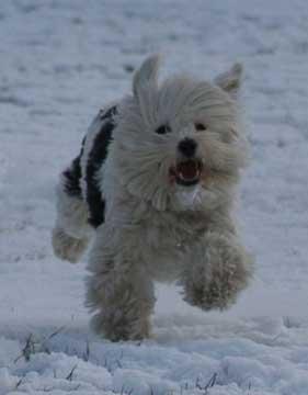 dog in snow at riverside park