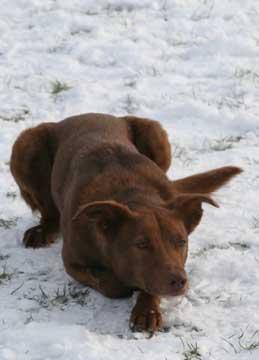Dog in Riverside Park snow